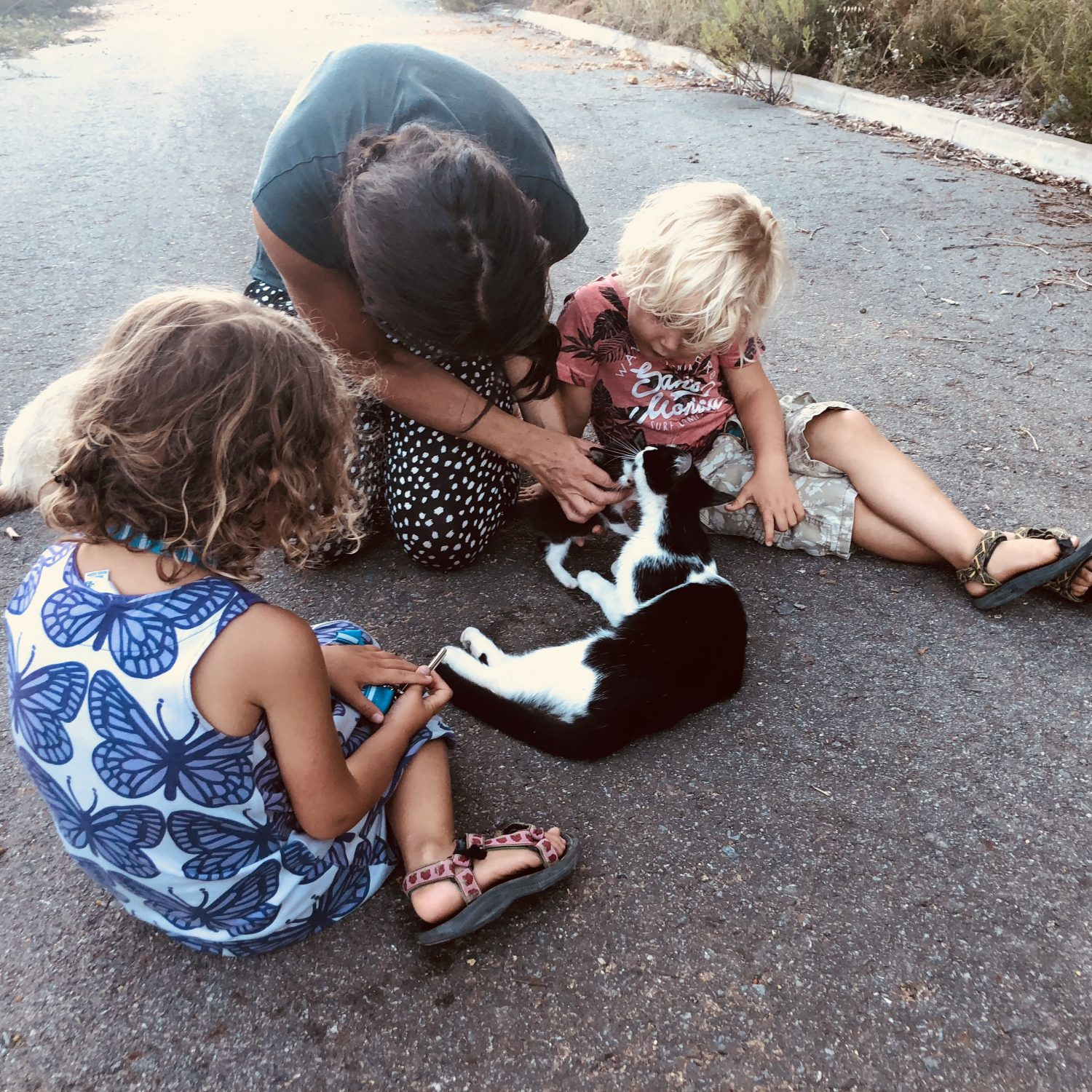 Expedition Family Happiness - Taking care of the stray kittens and their Mothers is daily routine!
